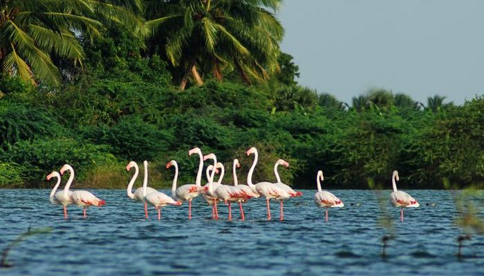 Salim-Ali-Bird-Sanctuary-goa